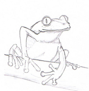 Frog study